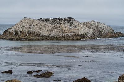 Bird Rock 2
